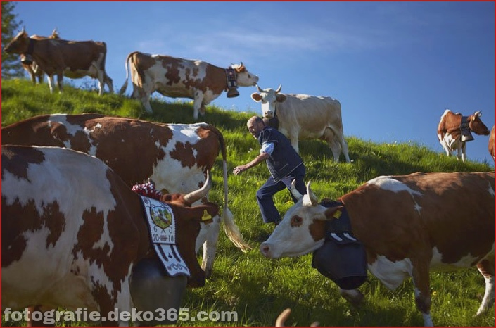 Schweizer Käsehersteller herstellen (21)