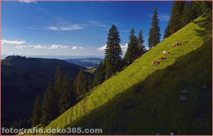 Schweizer Käsehersteller_5c90423993983.jpg