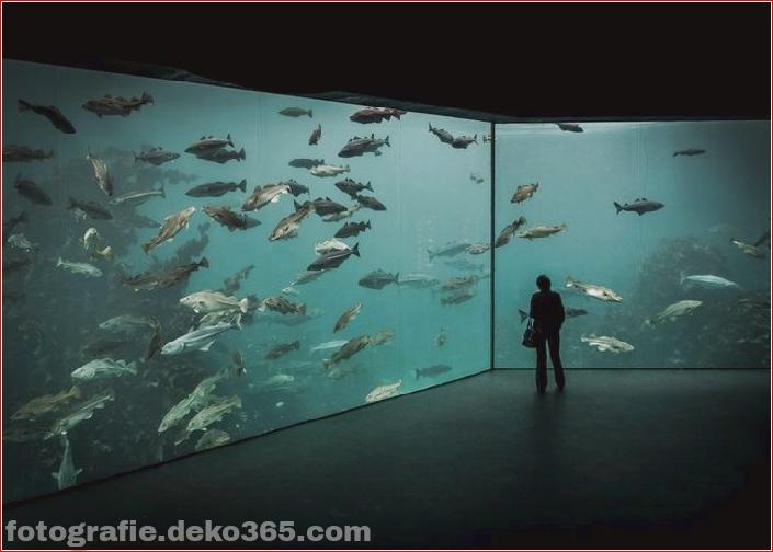 Atlantic Sea-Park