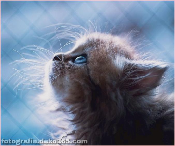 süßes Kätzchen der Welt_5c9062d6b9769.jpg