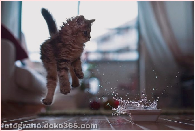 süßes Kätzchen der Welt_5c9062e1a6360.jpg