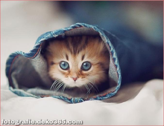 süßes Kätzchen der Welt_5c9062e668bd9.jpg