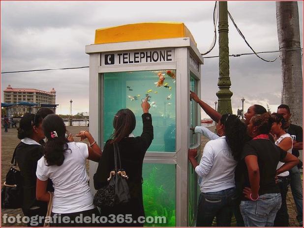 In Outdoor-Fischaquarien umgewandelte Telefonzellen (9)