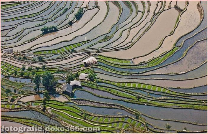 Die größten terrassierten Reisfelder der Welt, Yuen Yang, China (4)