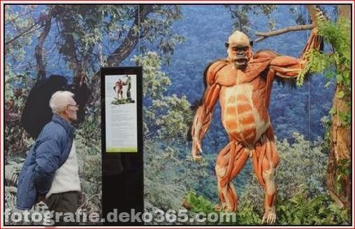 Tierkörperausstellung in Deutschland_5c905c4578da2.jpg