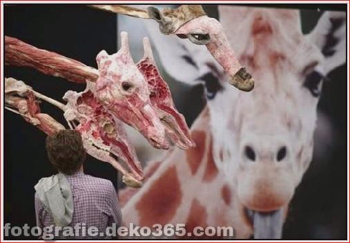 Tierkörperausstellung in Deutschland_5c905c4832348.jpg