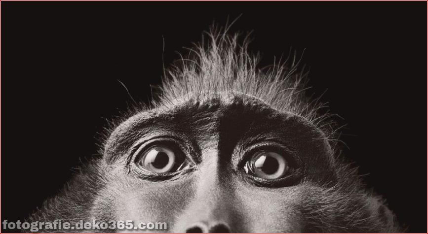 Tipps zur Tierfotografie_5c9005bfc3040.jpg