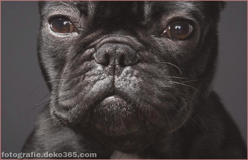 Tipps zur Tierfotografie_5c9005c44dd30.jpg