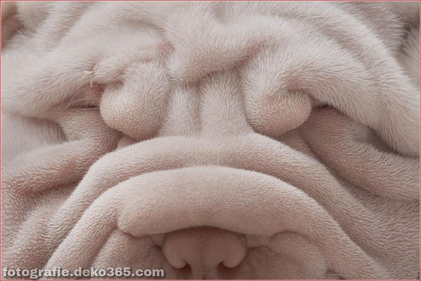 Tipps zur Tierfotografie_5c9005c649baf.jpg