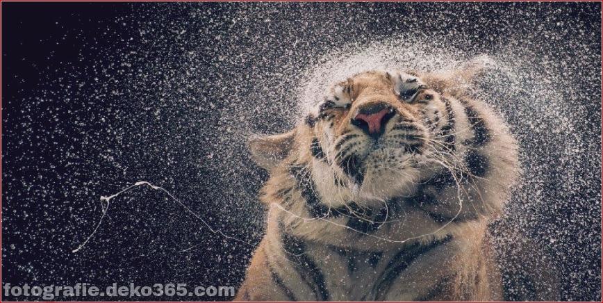 Tipps zur Tierfotografie_5c9005cb9b465.jpg