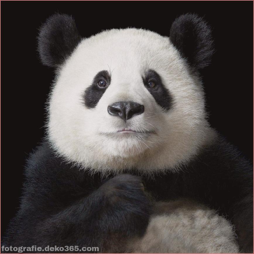 Tipps zur Tierfotografie_5c9005cf2fafa.jpg