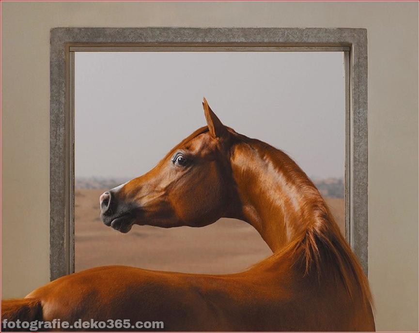 Tipps zur Tierfotografie_5c9005d642f44.jpg