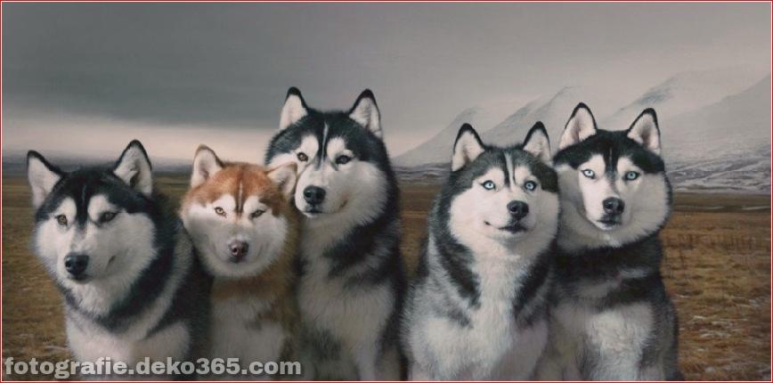Tipps zur Tierfotografie_5c9005d97a7bb.jpg