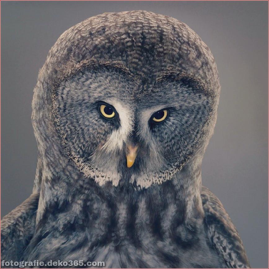 Tipps zur Tierfotografie_5c9005db6816d.jpg