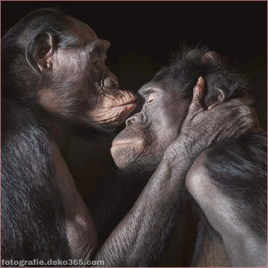 Tipps zur Tierfotografie_5c9005ddaed23.jpg
