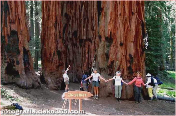 Top 10 Nationalparks in Kalifornien_5c904658608ef.jpg