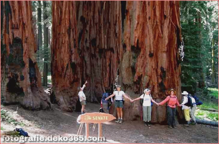 Sequoia und Kings Canyon