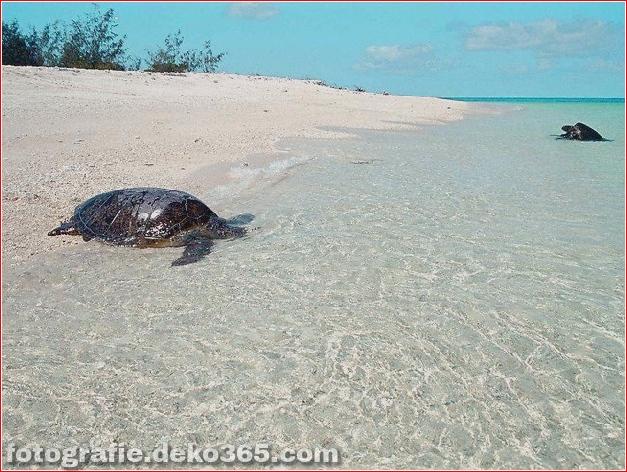 Beschäftigt auf Wilson Island, dem Great Barrier Reef