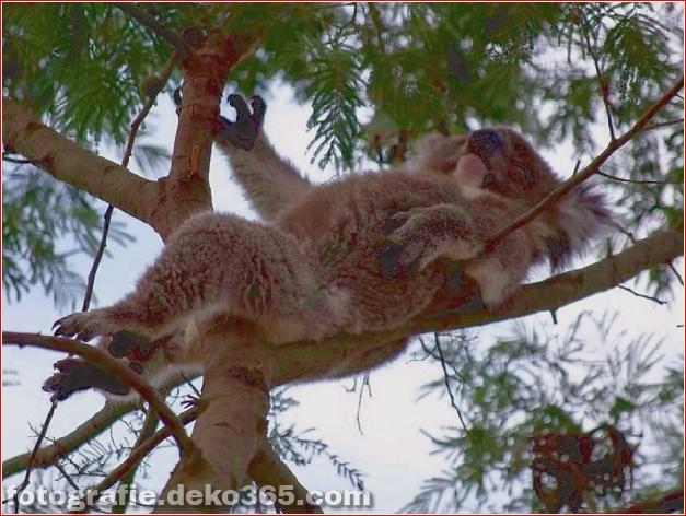 Top 10 Tourismus Australien Fotos von 2013_5c904568dc022.jpg