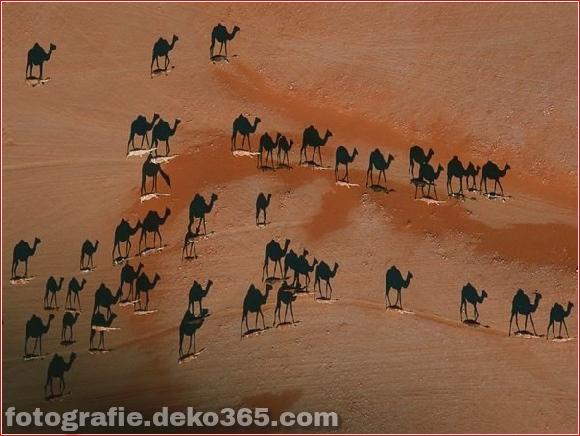 Schatten von Kamelen beim Gehen Landschaft Wüste bei Sonnenuntergang