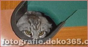 Versteckende Katze_5c9018c736c3e.jpg
