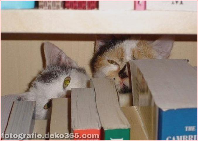Katzen spielen Verstecken mit dir (1)