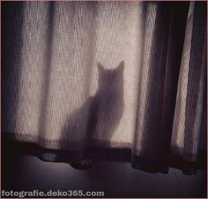 Katzen spielen Verstecken mit dir (2)