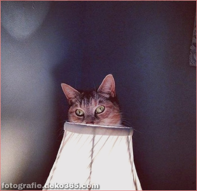 Katzen spielen Verstecken mit dir (3)