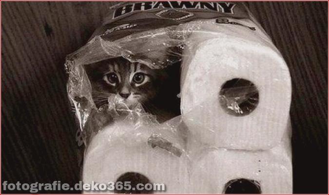 Katzen spielen Verstecken mit dir (7)