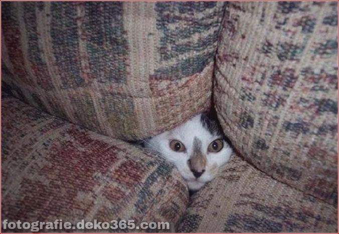 Katzen spielen Verstecken mit dir (8)