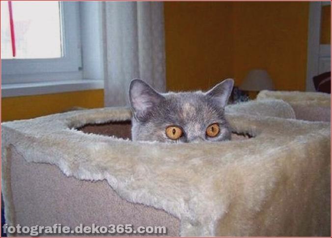 Katzen spielen Verstecken mit dir (9)