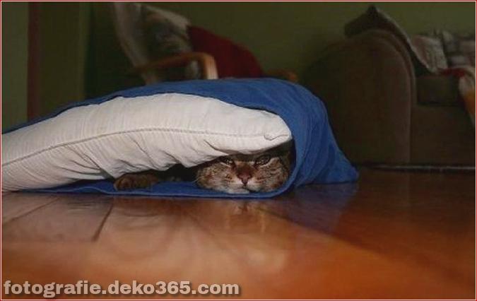 Katzen spielen Verstecken mit dir (10)