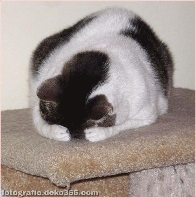 Katzen spielen Verstecken mit dir (11)