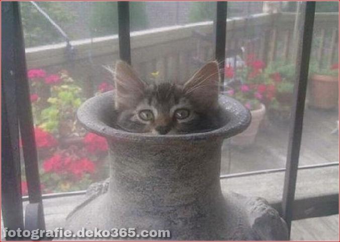Katzen spielen Verstecken mit dir (12)