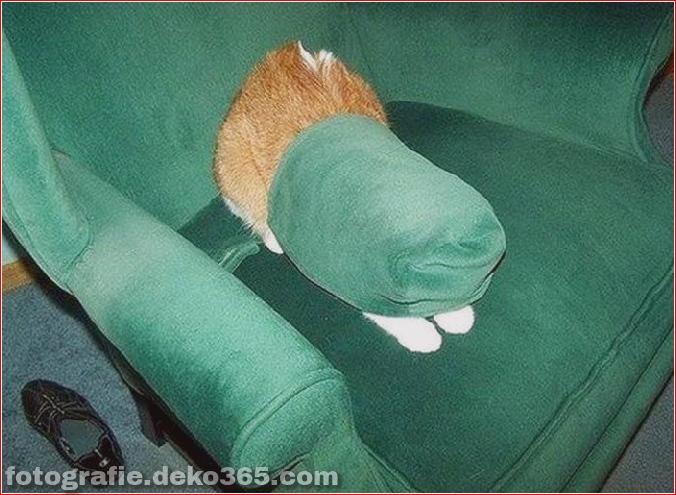 Katzen spielen Verstecken mit dir (13)