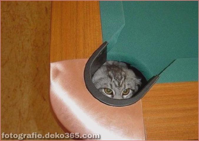 Katzen spielen Verstecken mit dir (14)