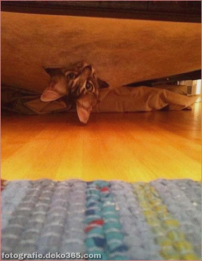 Katzen spielen Verstecken mit dir (15)