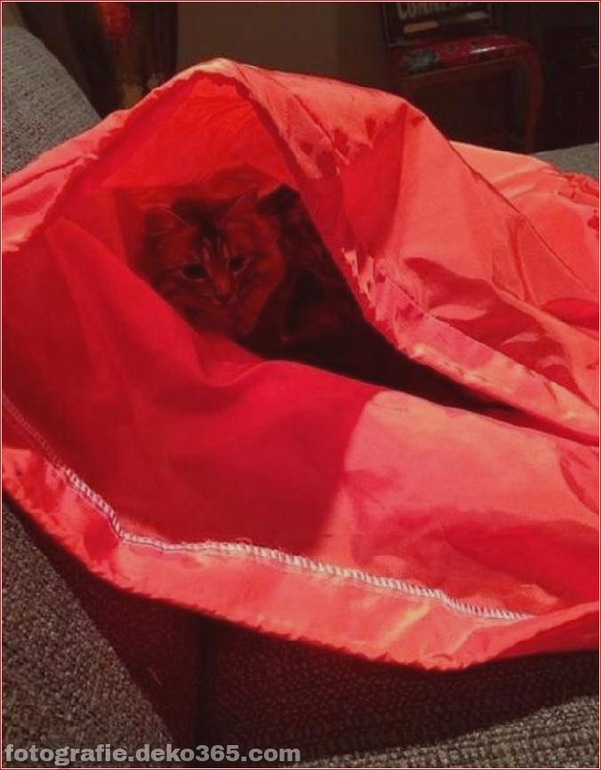 Katzen spielen Verstecken mit dir (16)