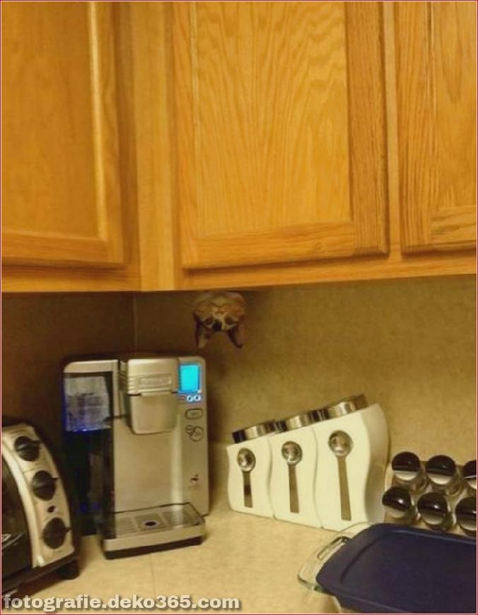 Katzen spielen Verstecken mit dir (17)