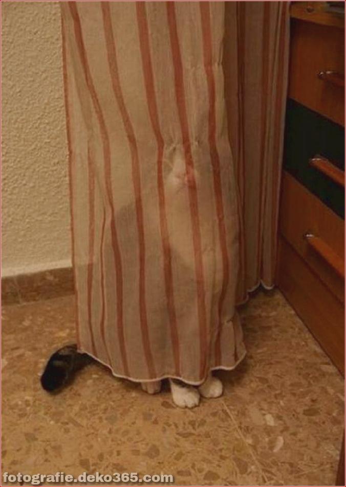 Katzen spielen Verstecken mit dir (18)