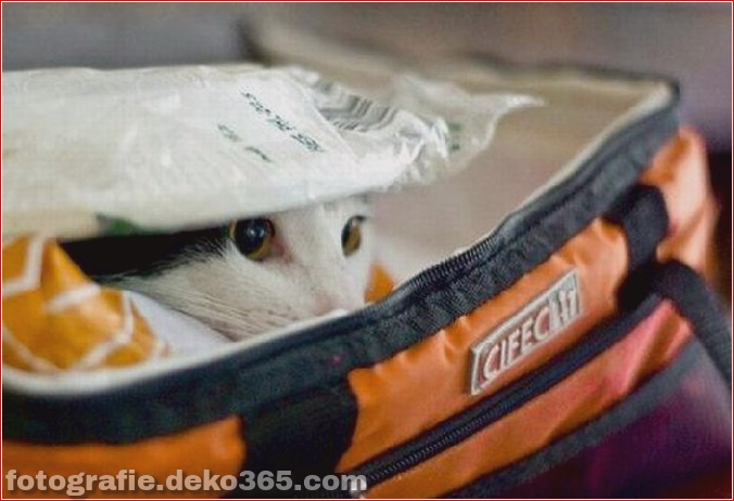 Katzen spielen Verstecken mit dir (20)