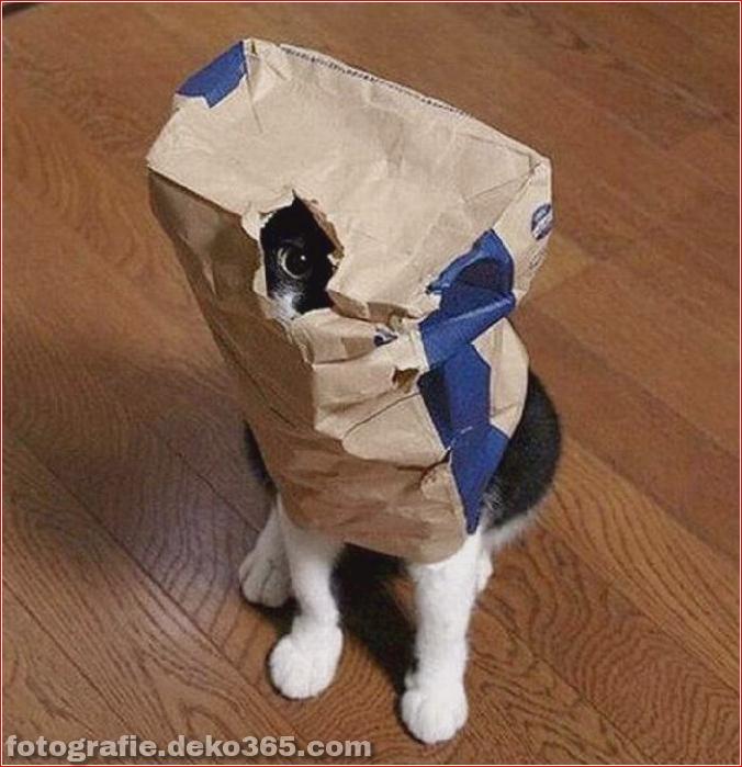 Katzen spielen Verstecken mit dir (21)