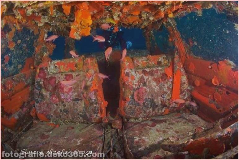 Visuelle Tour für erschreckende versunkene Wracks_5c9016fc15926.jpg
