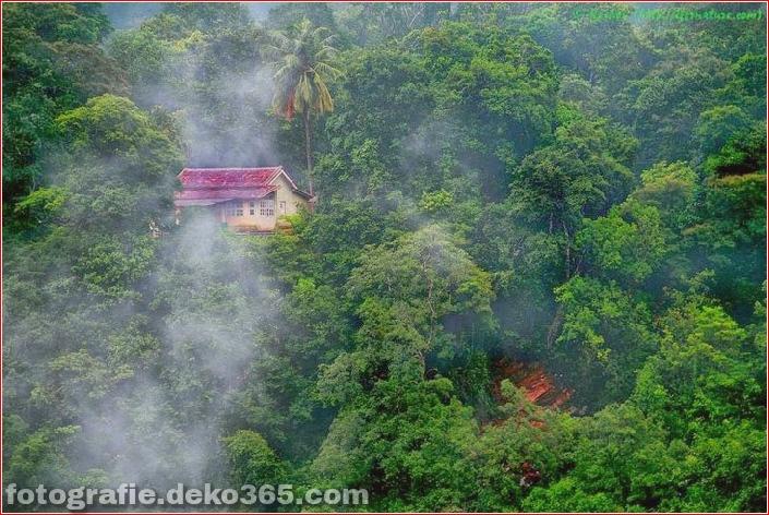 Sauberes Haus im Wald (2)