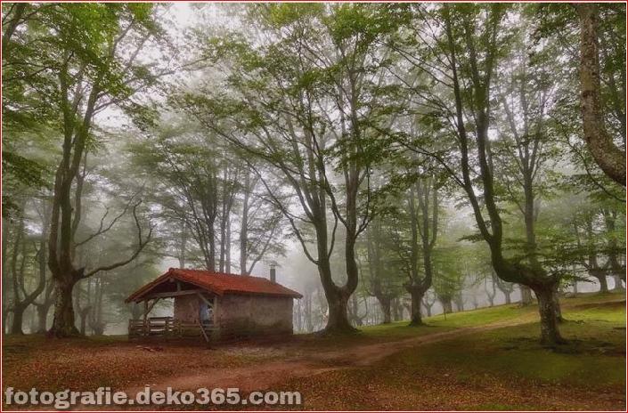 Sauberes Haus im Wald (5)