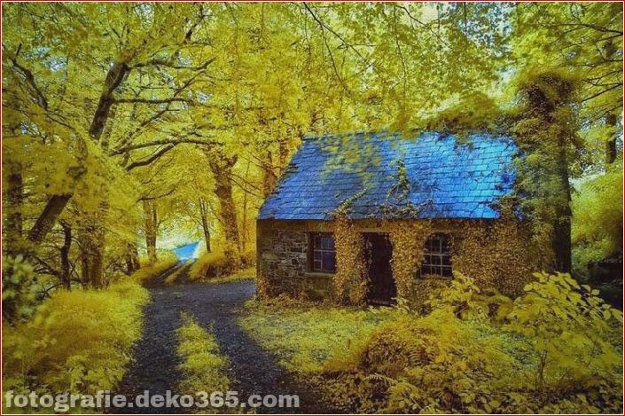 Sauberes Haus im Wald (14)