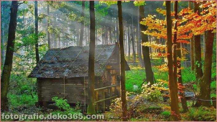 Sauberes Haus im Wald (18)