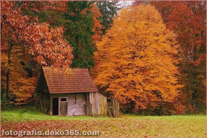 Sauberes Haus im Wald (19)