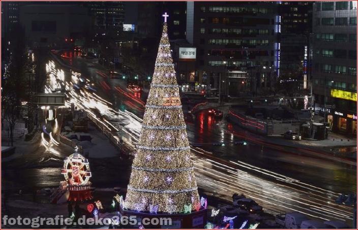 Weihnachtsbäume mit Lichtern Fotografie_5c906103a3a5c.jpg