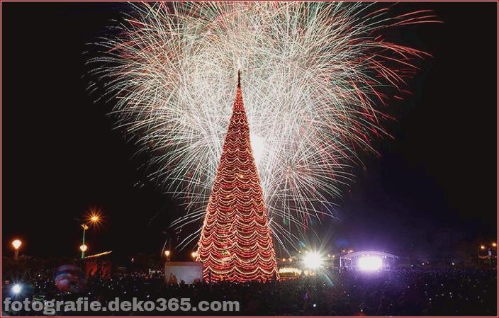 Weihnachtsbäume mit Lichtern Fotografie_5c90610581835.jpg